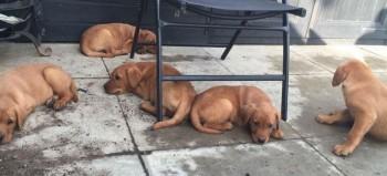 Photo of stolen puppies