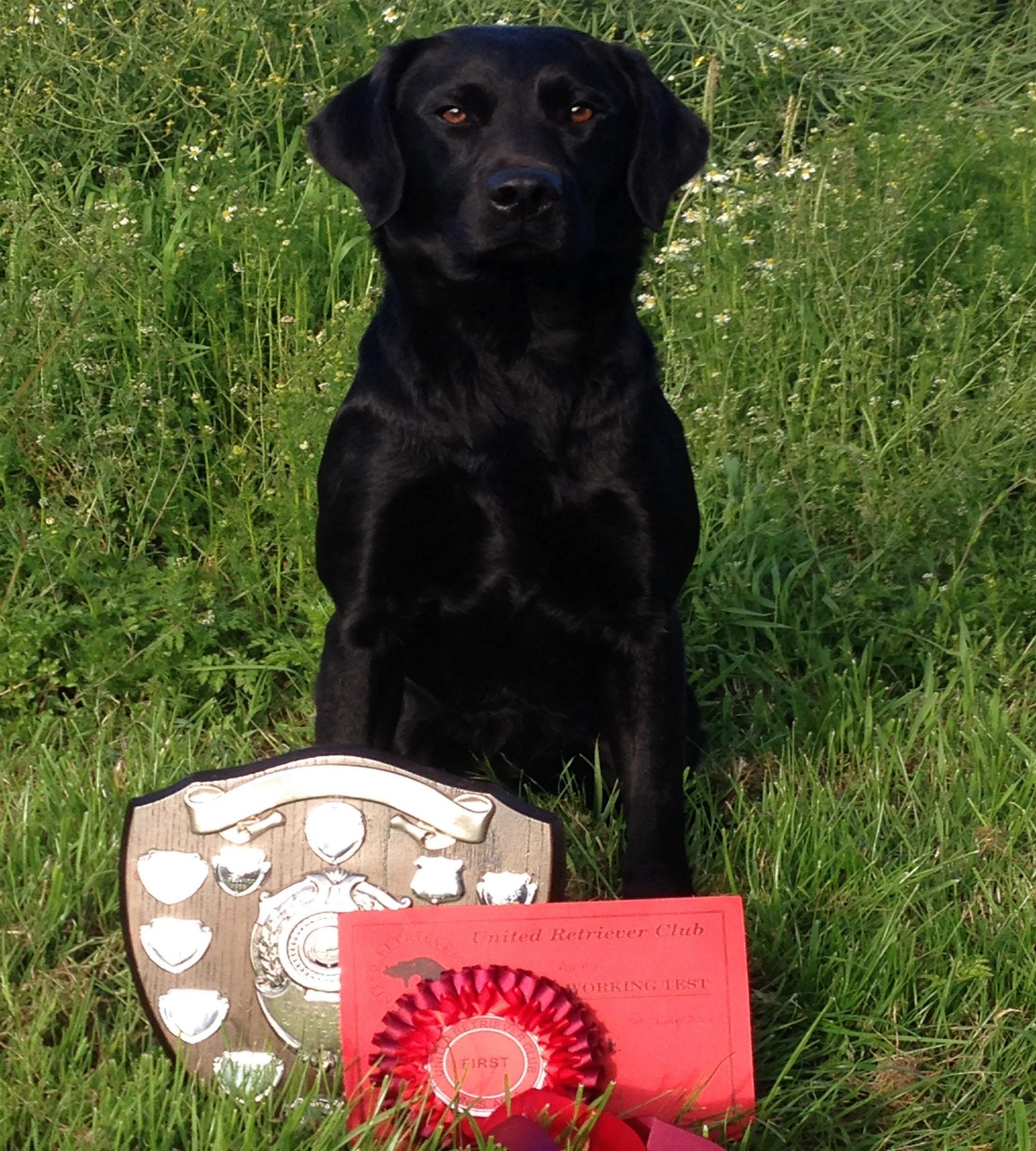 Winner of puppy trails competition with winners shield and red rosette.