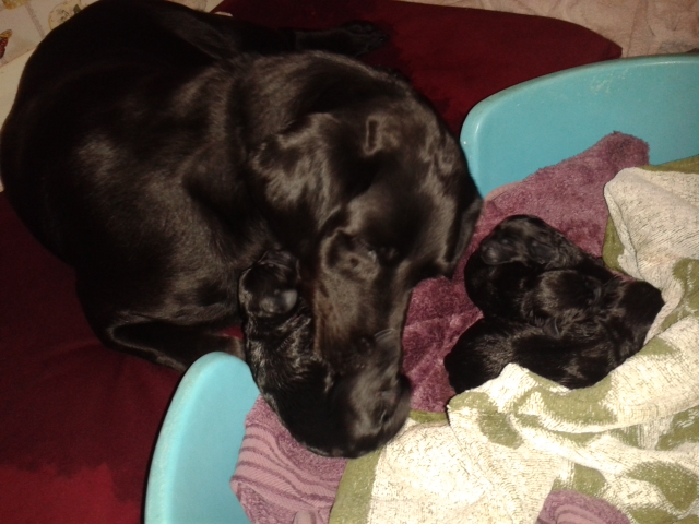 Mum looking after her puppies